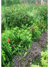الأعشاب والنباتات