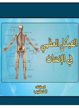 الهيكل العظمي في الإنسان